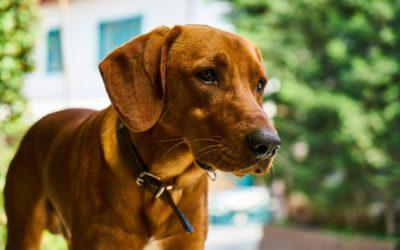Promozione: articoli per cani